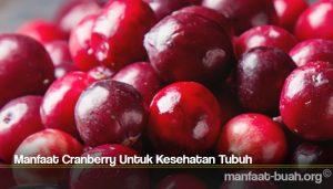 Manfaat Cranberry Untuk Kesehatan Tubuh