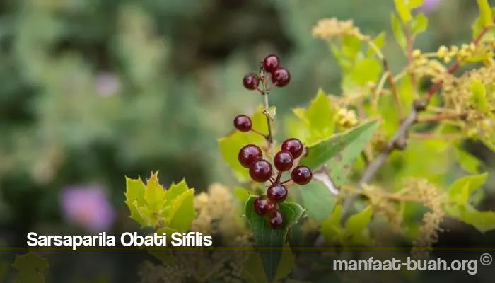 Sarsaparila Obati Sifilis