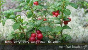 Jenis Berry Berry Yang Enak Dinikmati