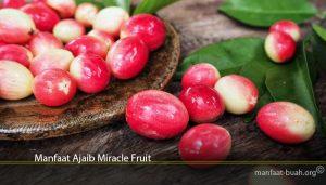 Manfaat Ajaib Miracle Fruit