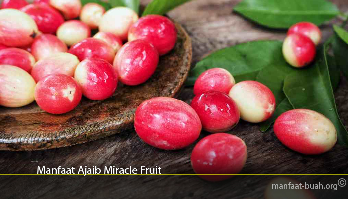 Manfaat Ajaib Miracle Fruit